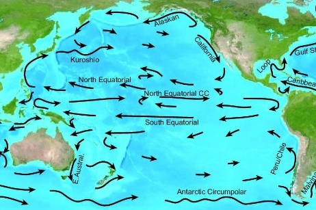 pacific ocean currents and temperature  Pacific Ocean Currents.jpg